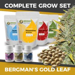Cheap Gold Leaf Cannabis Seeds