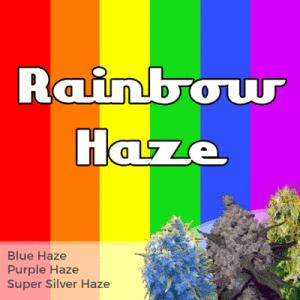 Rainbow Haze Seeds Mixpack