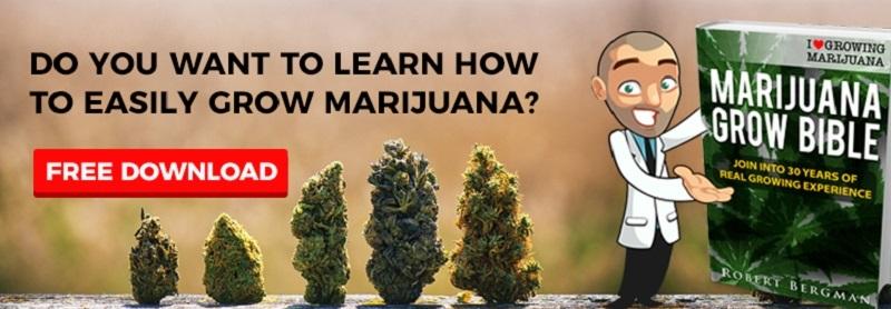Cannabis Seeds Grow Guide