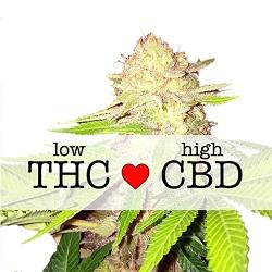 Strawberry kush CBD Medical Cannabis Seeds