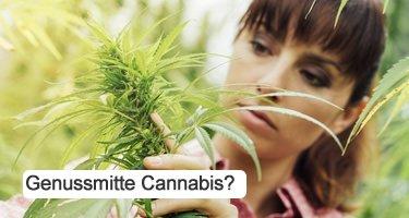 Ist Cannabis ein Genuss?