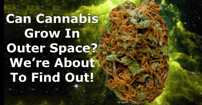 CAN YOU GROW WEED IN OUTER SPACE