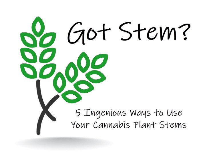 MARIJUANA STEM IDEAS