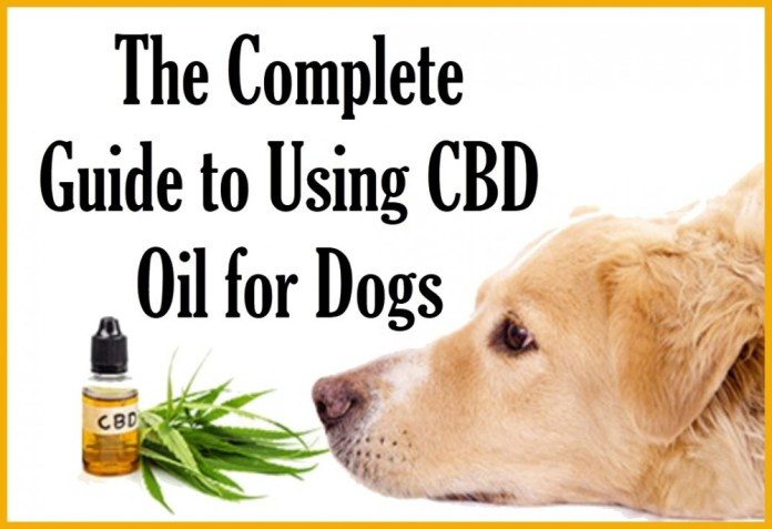 GUIDE TO CBD OIL FOR DOGS