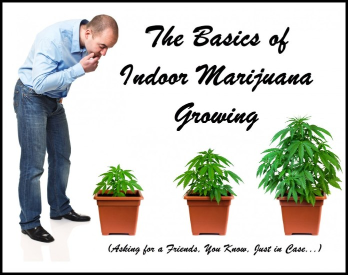 A GUIDE TO INDOOR MARIJUANA GROWING