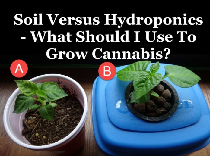HYDROPONIC WEED VERSE SOIL