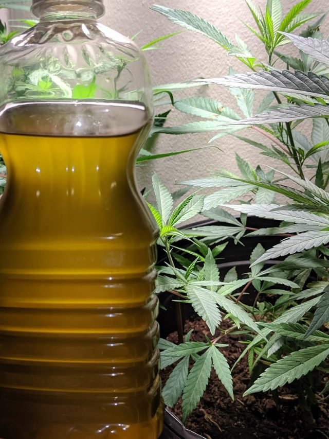 mason jar decarb, easy decarb method, mason jar decarboxylation, how to make cannabis oil, how to make cannabis coconut oil, easy cannabis oil method, marijuana oil recipe, weed oil recipe easy, homemade cannabis oil recipe, cooking oil cannabis, infused oil recipe, flower to oil ratio, flower to oil ratio cannabis edibles, cannabis edible recipes, easy cannabis recipe, cannabis oil slow cooker, cannabis oil in a crock pot, cannabis oil mason jar, stovetop cannabis oil method, cannabis cooking, cooking with cannabis