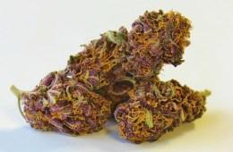 bulletproof marijuana