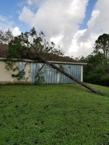 Tree Falls on Shed