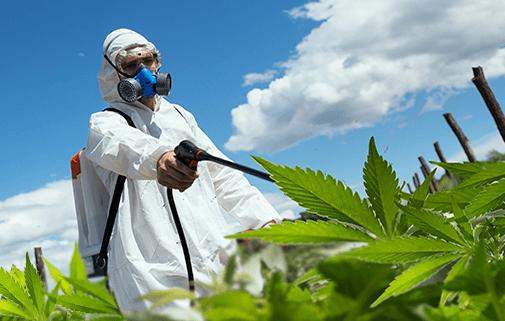 cannabis sprays