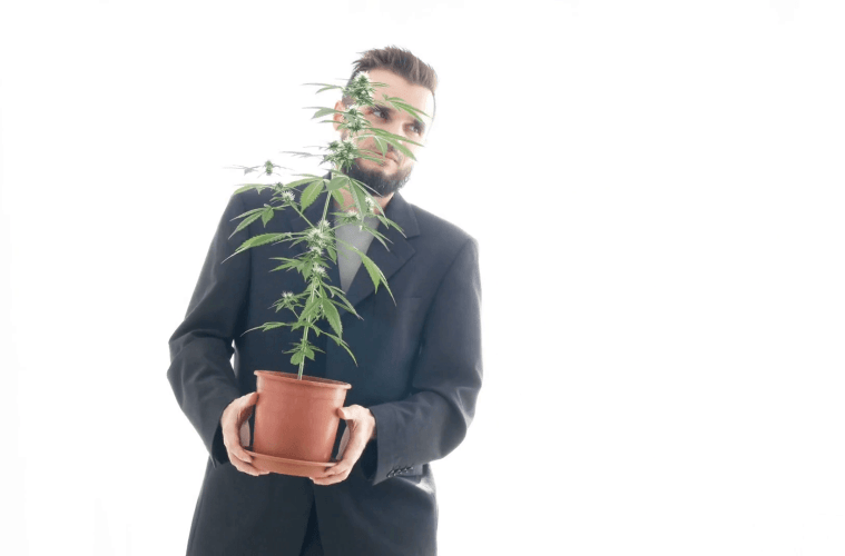 weed business