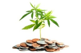 Tax Tips For Tokers: Get Your Money Back!