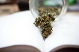 Cannabis or marijuana, medicinal plant or medical program?