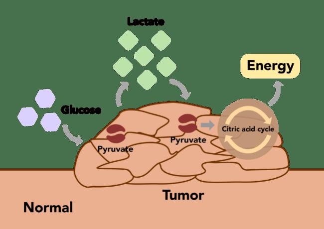 cannabis to kill cancer cells