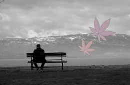 cannabis use older adults