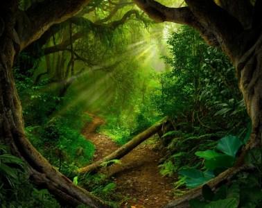 fantasy islands and grassland sativa
