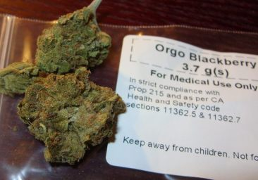 blackberry_medical_cannabis