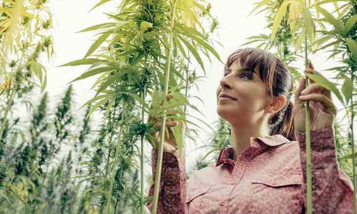 Picking The Brains Of Leading Female Cannabis Execs