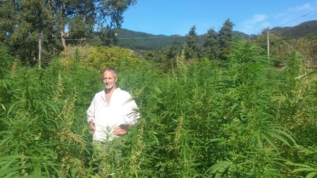 "Hemp grower Andrew Earle says legalisation would be a ""hugely positive move"" for the economy."