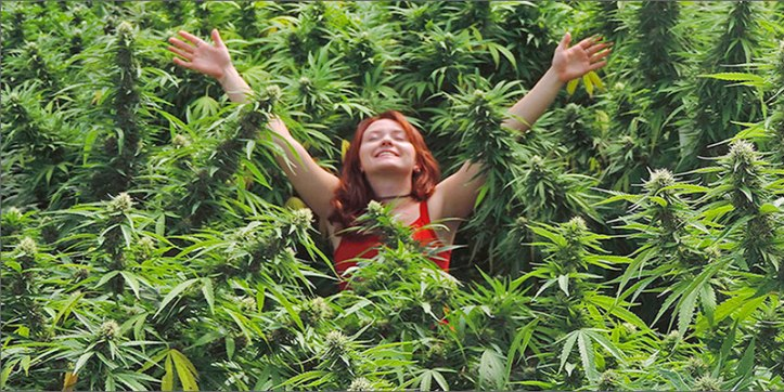 organic hero The Definitive Guide To Growing Organic Marijuana
