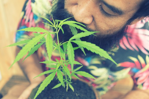 A man smelling the leaves of a potted cannabis plant held in his hands .