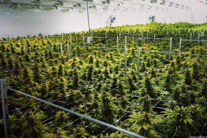 canopy_growth-696x464