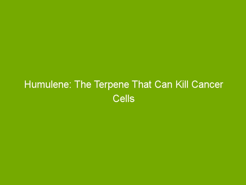 Humulene: The Terpene That Can Kill Cancer Cells