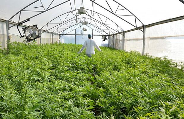 Indoor Plants Edmonton