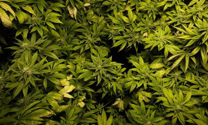 Cannabis Legalization Bills Introduced in Portugal