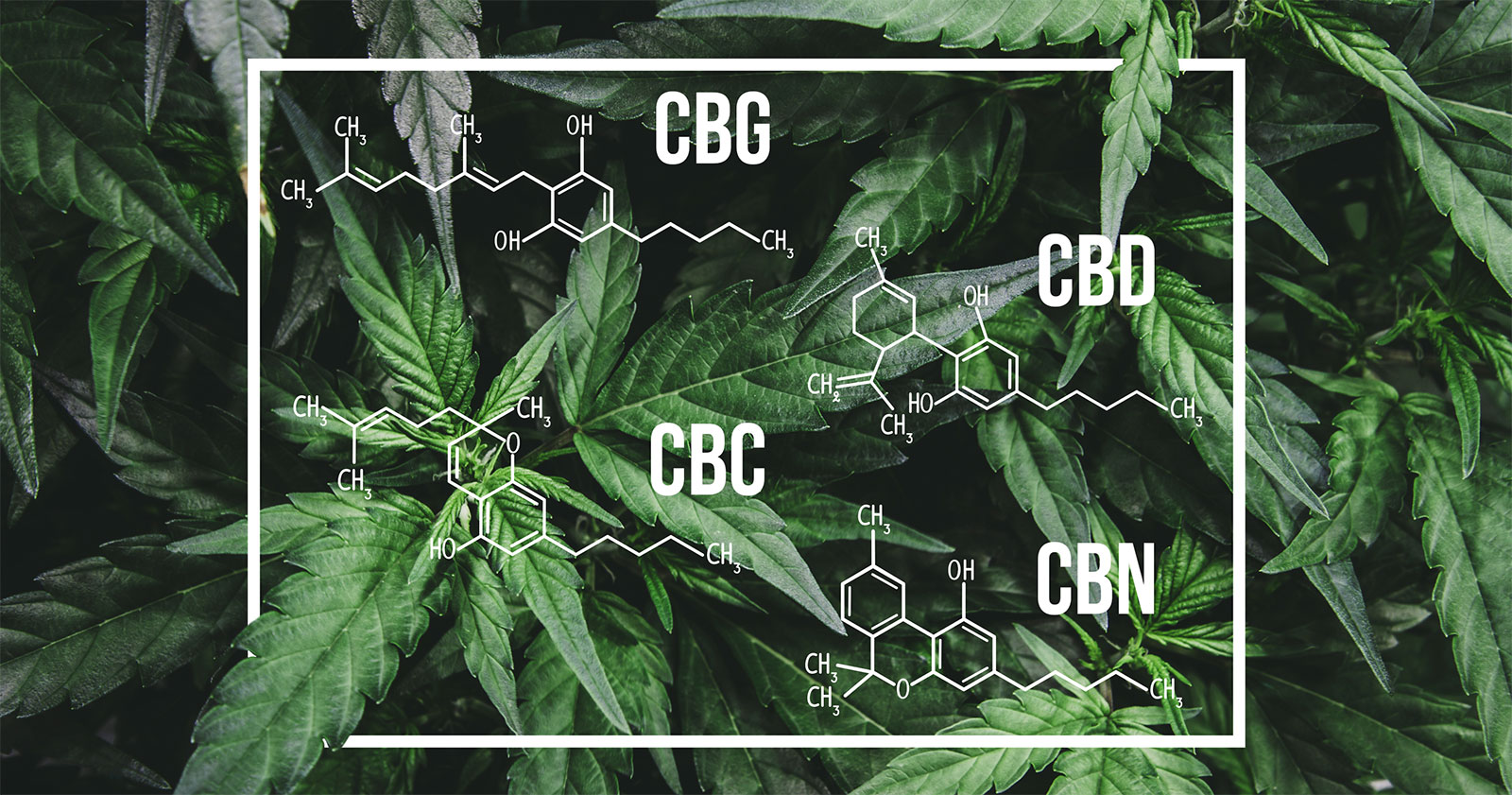 cannaglobe-cbd-cbg-cbn-cbc-molecular-structures-hemp-cannabis