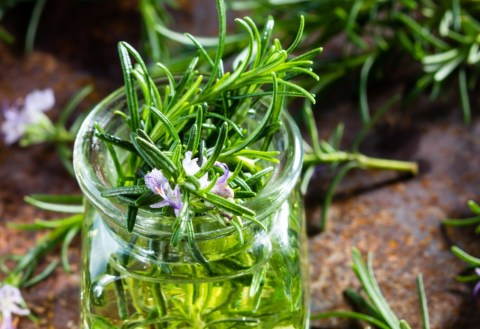 CannaGlobe Key Cannabis Terpenes Carene