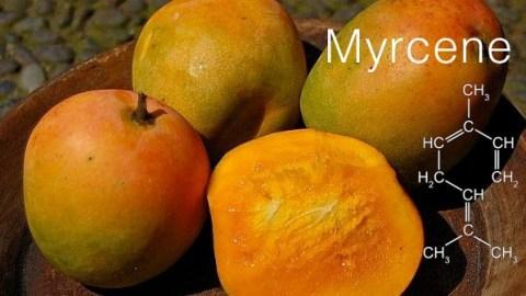 CannaGlobe Key Cannabis Terpenes Myrcene
