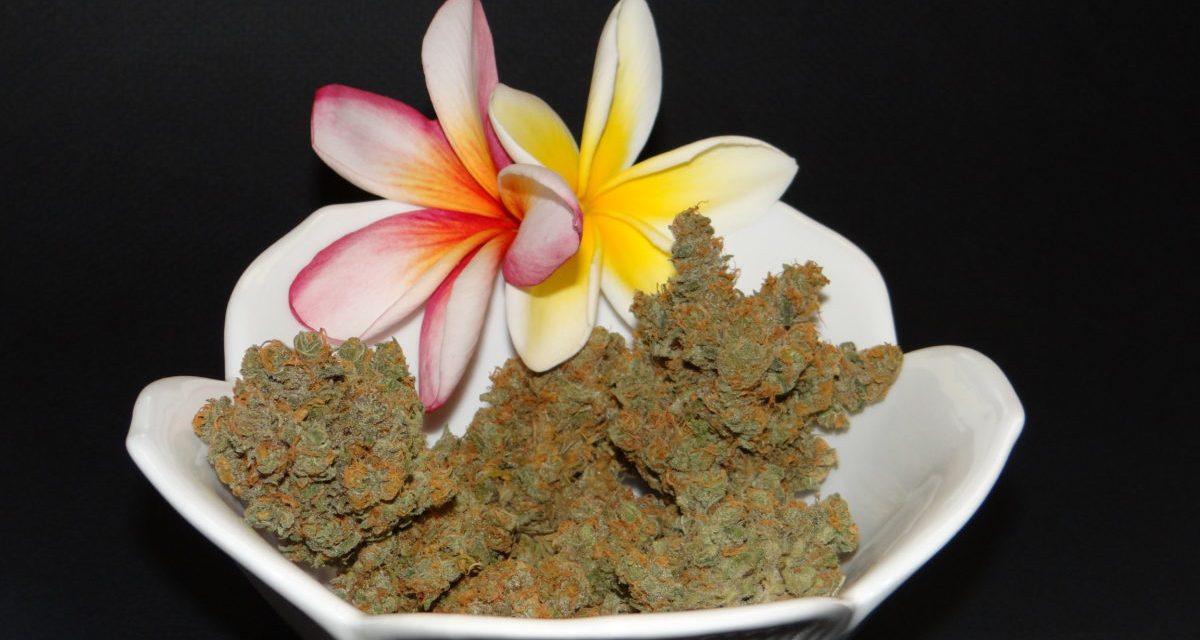 Blue Maui strain review