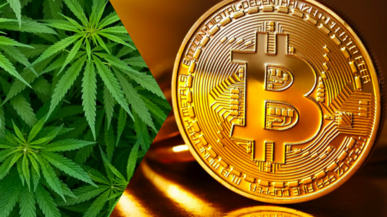 CANNABIS INVESTING: CRYPTOCURRENCY OR CANNABIS?