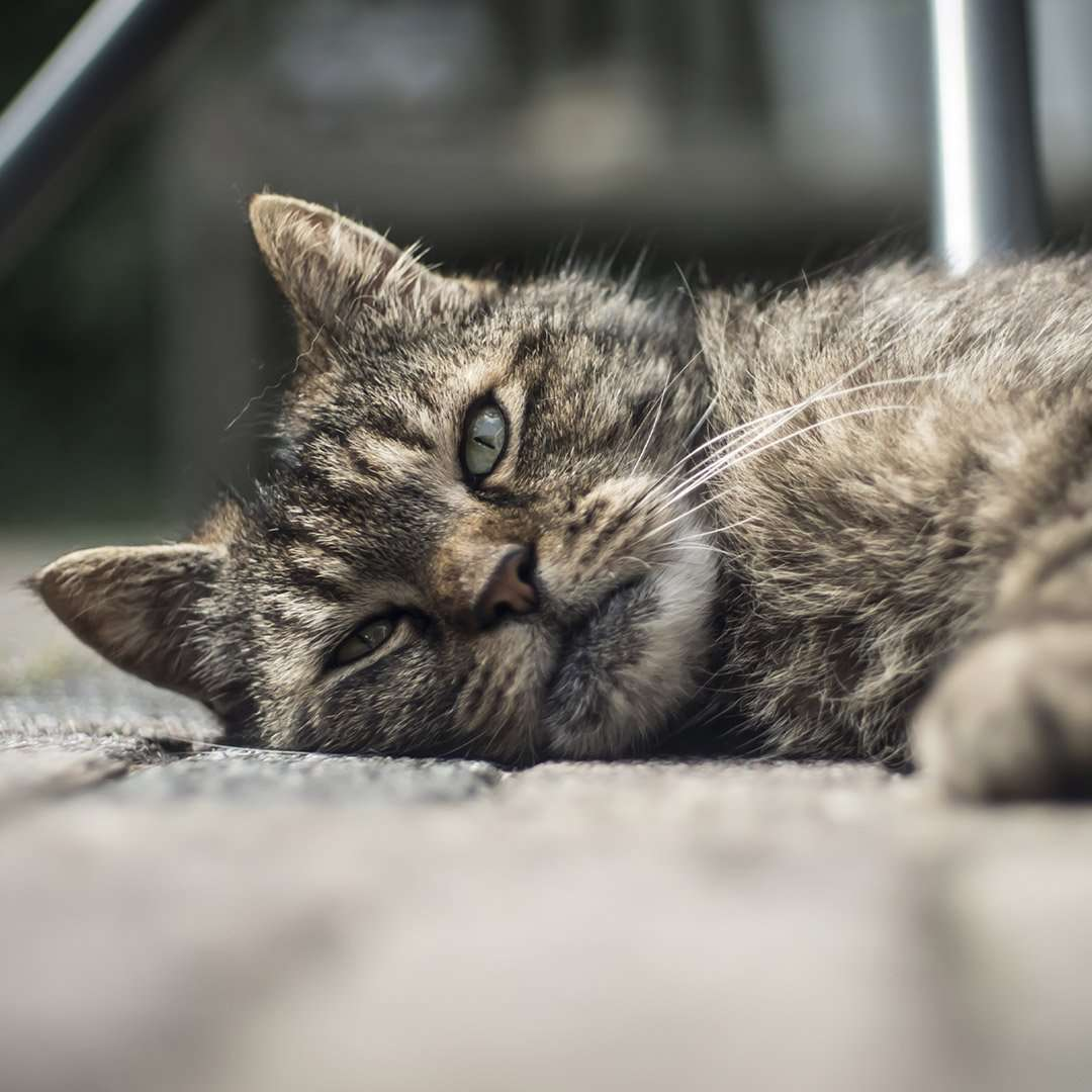 Cat laying on the ground in a home.