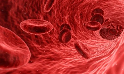 Red blood cells graphic