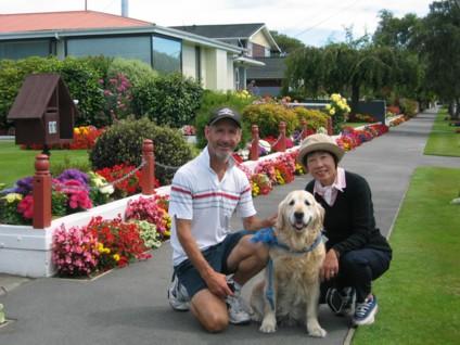 Begonia s in Christchurch Garden in February