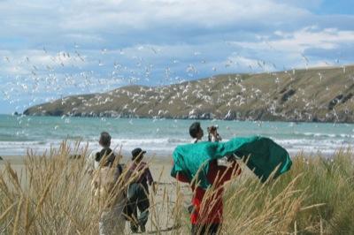 Akaroa Day Tour walk on Okains Beach