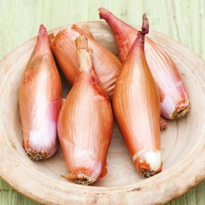 Cannich Stores : Shallots