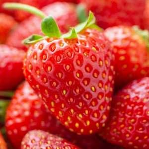 Pre-Packed Strawberries