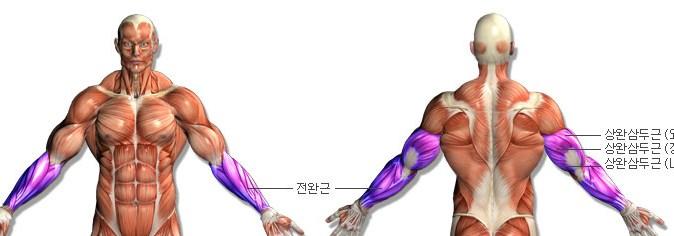 360-270-triceps-01-13