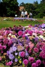 98 CannonHallGuideBook_8357-gardens