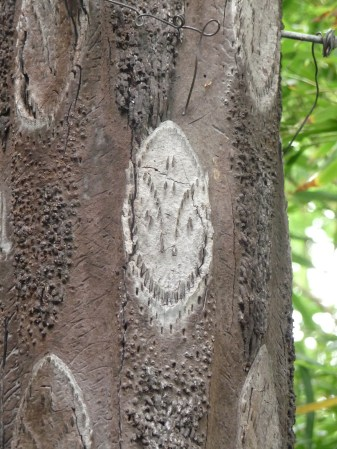 57.smiley face tree2