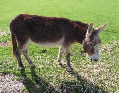 14.Donkey Sanctuary