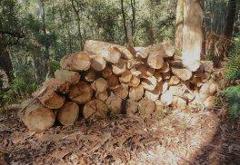 10.wood6