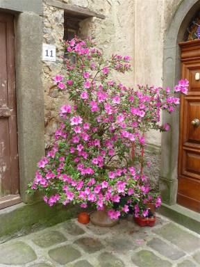 27.flowers