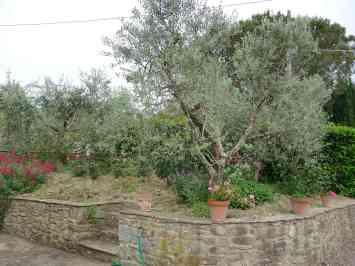 23-garden