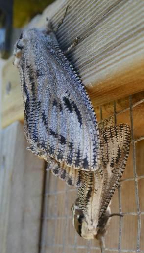 22.moths
