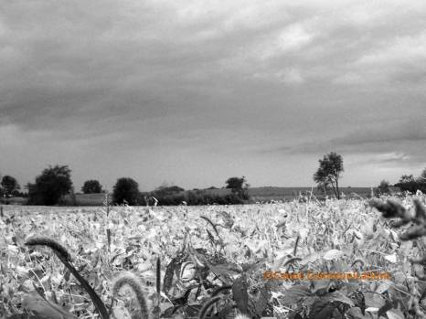 black and white prairie
