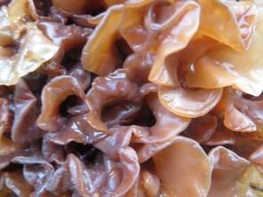 colorful curls of fungi